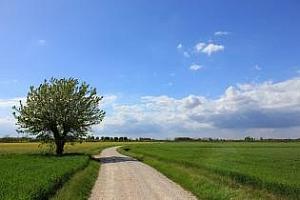 Новата реколта пшеница в Русия ще е 76.5Ммт, прогнозират от ИКАР