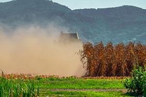 Южна Корея внася фуражна царевица за юли - резултати