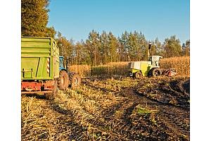 Южна Корея внася все по-евтина фуражна царевица