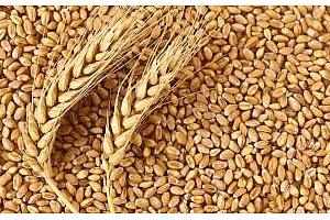 Южна Корея внася хлебна и фуражна пшеница