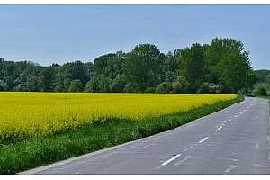 Спокойствие и тишина в Европа, зърната в САЩ се възстановяват