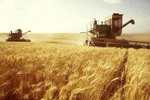 Цената на пшеницата ще се вдигне още заради сушата в Австралия