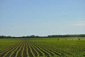 FranceAgriMer понижават запасите от пшеница и ечемик
