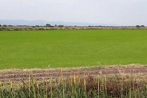 Нов връх за пшеницата в Париж