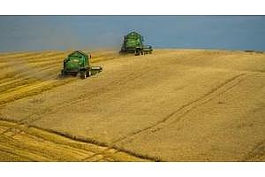 Египет договаря внос само на 2 карга с пшеница