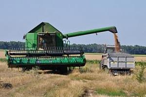 Реколтата от пшеница в България ще достигне 4 млн. тона