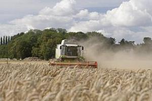 Прогнозата за реколта от пшеница в Русия е понижена до 45 млн. тона