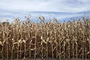 Коментар за сушата в САЩ и ефектът й върху пазарите
