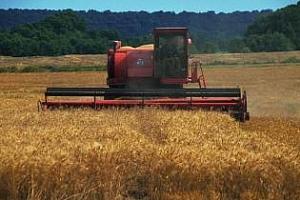 Добивът на зърно в Казахстан е паднал наполовина