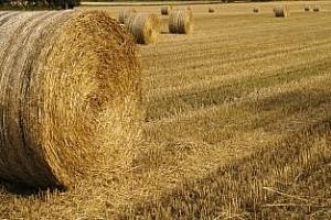 Русия: Исторически малки запаси от зърно, особено от пшеница