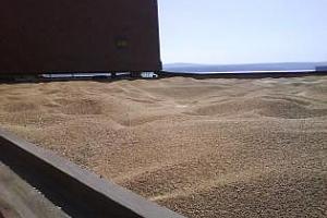 Украйна изнесе от началото на 2012/13 МГ почти 4,7 млн. тона зърно