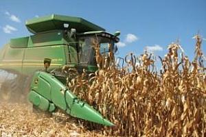 В САЩ прибират царевицата с рекордни темпове