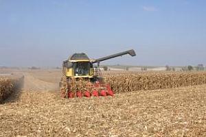 Реколтата от царевица в Румъния е намалена с 60%