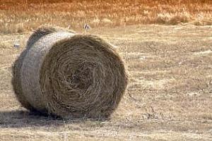 Цената на фуражите в България е с поне 20% по-висока в сравнение с 2011 г.