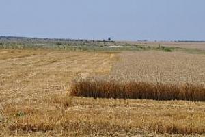 Понижена прогноза за реколтата от пшеница в Австралия с 2 млн. тона