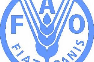 FAO понижи прогнозата за световното производство на зърно до 2 286 млрд. тона