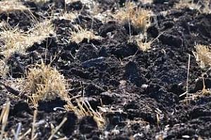 """10 млн. лева от фонд """"Земеделие"""" за подпомагане на фермерите за реколта от пшеница 2013 г."""