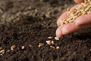 Есенната сеитба на зърнени култури в България върви с добри темпове