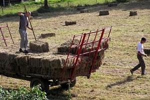 Сушата в Румъния унищожи част от реколтата и попречи на сеитбата на зимните култури