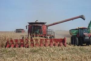 2/3 от царевичната реколта във Франция все още не е прибрана