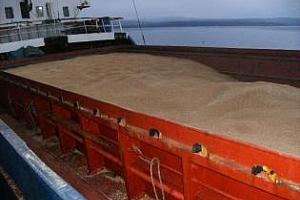 Лицензите за износ на европейска пшеница са наполовина по-малко от миналата седмица