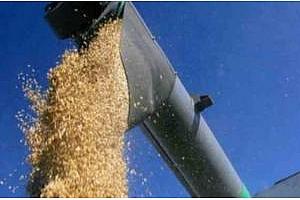 Сутрешно кафе: Несигурност на пазара за зърно преди изборите в САЩ и доклада на USDA