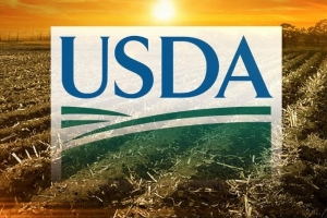 Скучен USDA доклад и продължаващи загуби на зърнените пазари