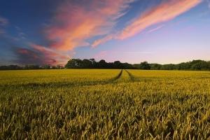 USDA понижава с 0.9Ммт реколтата от пшеница в Украйна