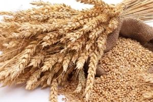 Саудитска Арабия договаря внос на 730кмт пшеница