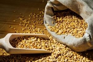 Цените на зърнените пазари отново са под натиск