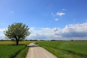 Бърза сеитба и рекордни площи с пшеница в Аржентина