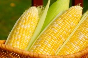 Южна Корея договаря внос на нова реколта царевица