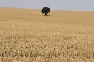 Египет отново е на пазара за хлебна пшеница