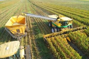ЕК очаква рекордни реколти от царевица и слънчоглед в България