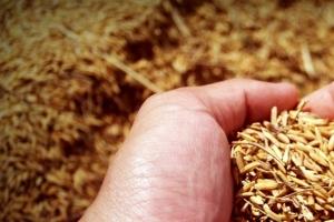 Консолидация на зърнените пазари преди USDA доклада