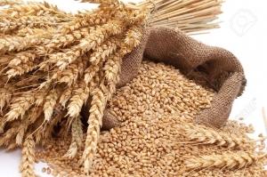 Офертните нива на пшеницата за Египет поевтиняват