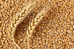 Йордания ще внася карго с 60кмт хлебна пшеница