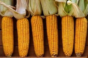 Южна Корея вече договаря внос на царевица за 2020