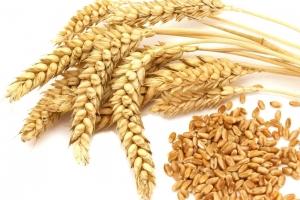 Турция ще купува хлебна пшеница за октомври 2019