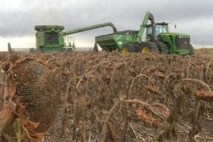 Ценова корекция на зърнените пазари преди USDA