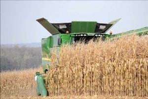 Пазарите на пшеница и царевица записват седмични поскъпвания