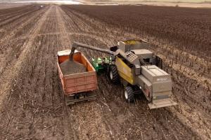 ЕК понижа добивите на царевицата и слънчогледа в България
