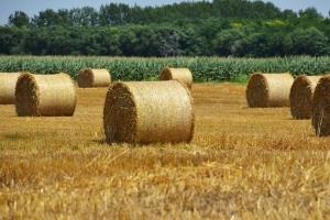 Изобилно предлагане потиска цените на пазарите на пшеницата