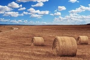 Бангладеш ще купува пшеница за декември 2019