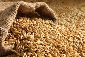 Турция ще внася твърда пшеница и фуражен ечемик