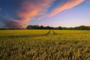 Фючърсите на пшеницата на MATIF подновяват възхода