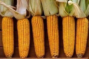 САЩ засилват вноса на царевица от Бразилия