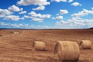Зърнените пазари на MATIF поскъпват за четвърта поредна седмица