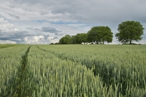 Фуражен завод от Южна Корея ще внася фуражна пшеница