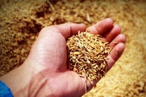 Зърнените пазари се възстановяват след USDA доклада